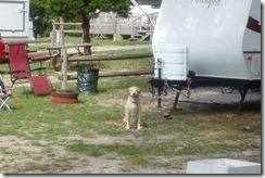 Maggie waiting patiently on our site